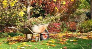 Дайджест осенних работ, подготовка участка к зиме Осенние работы в саду и дома