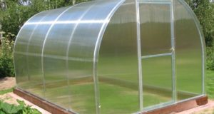 Пленка, стекло или поликарбонат: что лучше для теплицы?