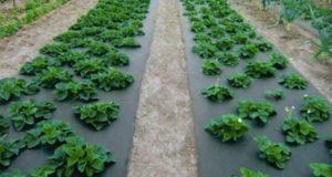 Выбор агроволокно. Главные советы