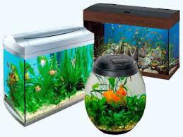 Как подготовить аквариум для рыбок?