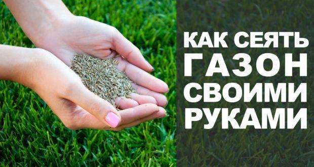 Семена для выращивания газонной травы