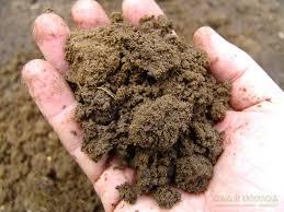 Пять критериев выбора плодородного грунта для приусадебного участка