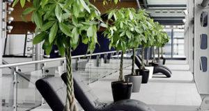 Как правильно ухаживать за домашними растениями