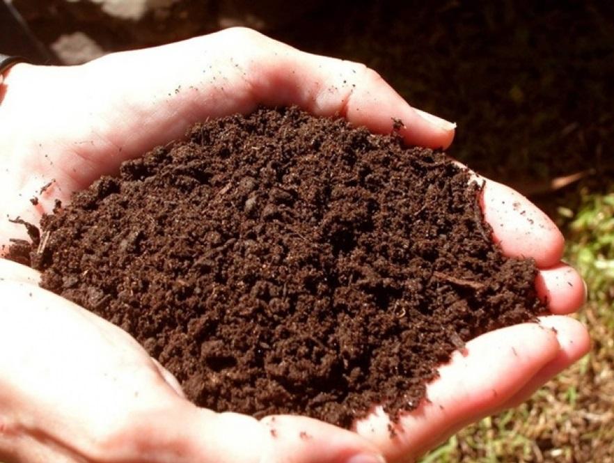 Что нужно учитывать при выборе почвогрунта для рассады