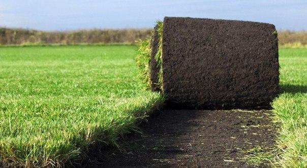Покупка рулонного газона как выгодное решение во всех отношениях