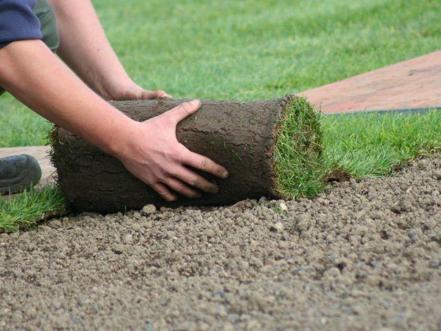 В чем особенность рулонного газона