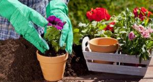 Ухаживать за садом или огородом – как найти необходимую информацию