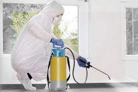 Бизнес на обработке от насекомых и грызунов